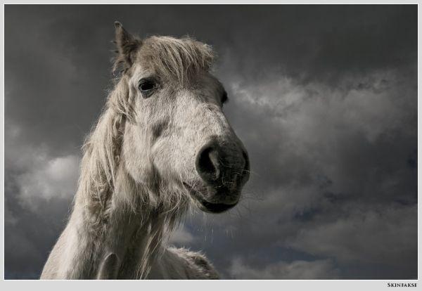 horse, skinfakse