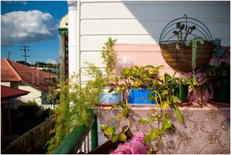 Liz's patio garden