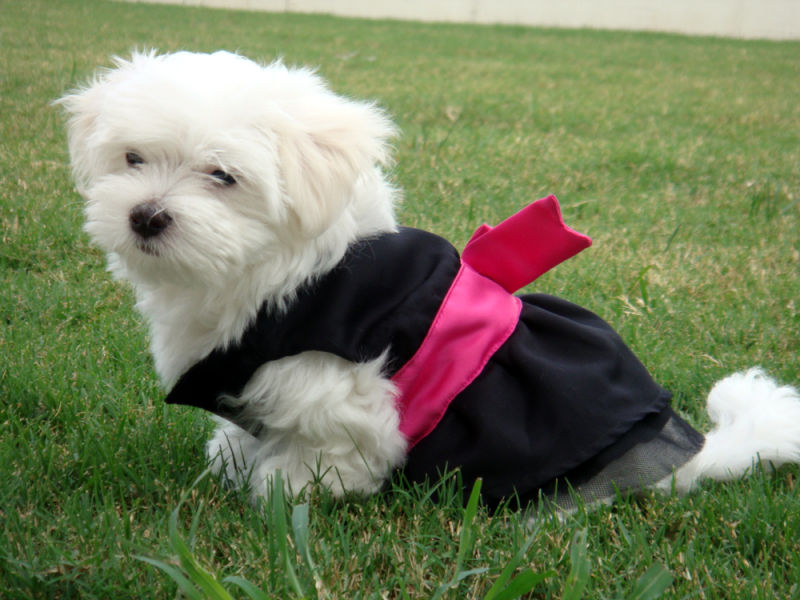 Cute dog in outfit
