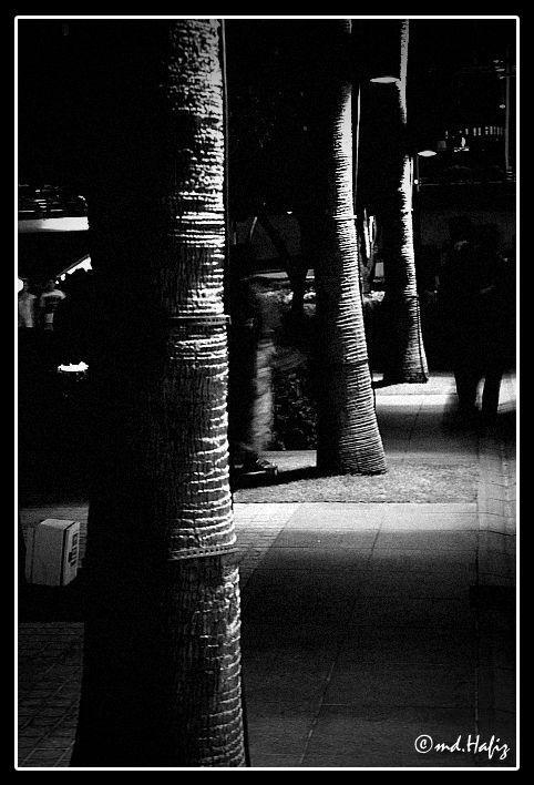 Tree Barks by md.Hafiz