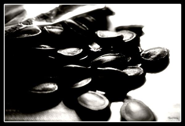 Spill Seeds by md.Hafiz