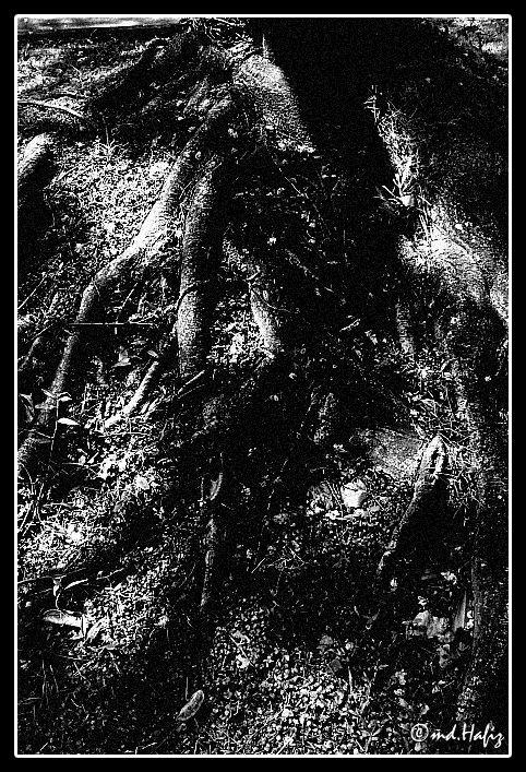 Decomposition by md.Hafiz