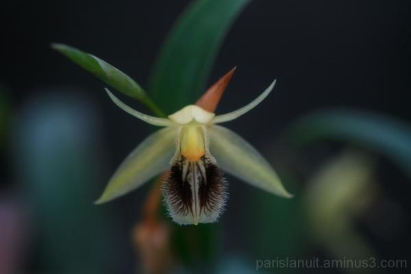 Orchidées (3)