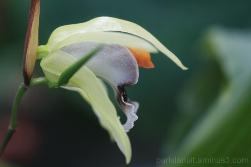 Orchidées (4)