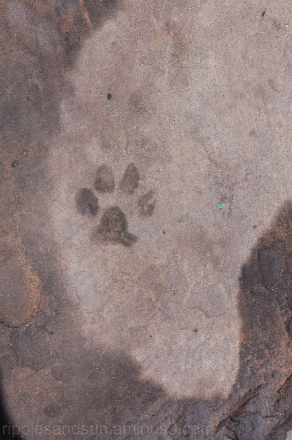 wet paw print on the heart