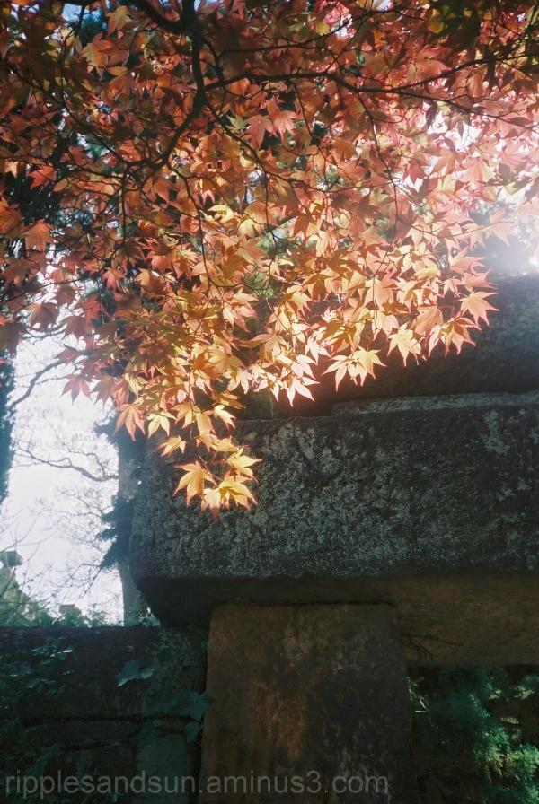 Biddulph Grange Garden Staffordshire