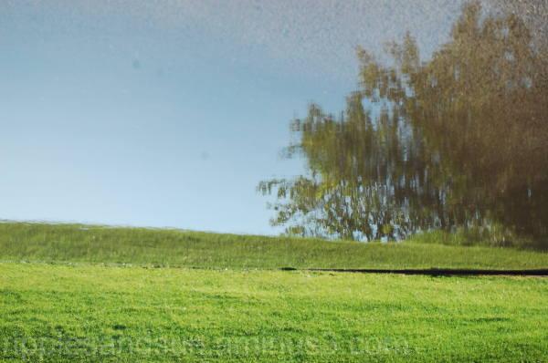 drunken grass