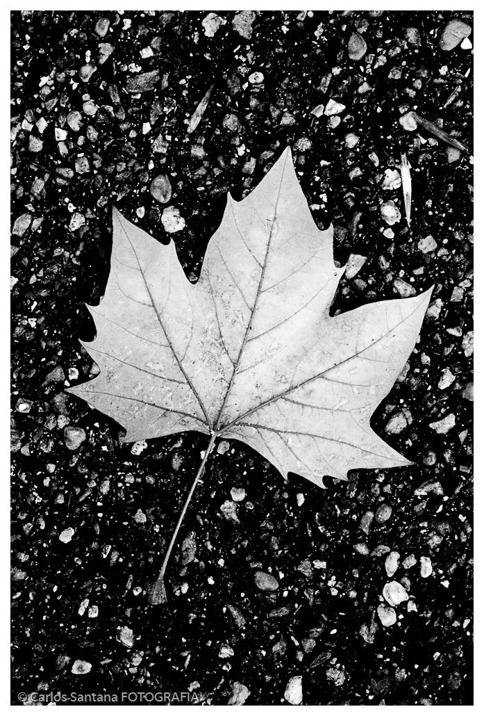 A folha