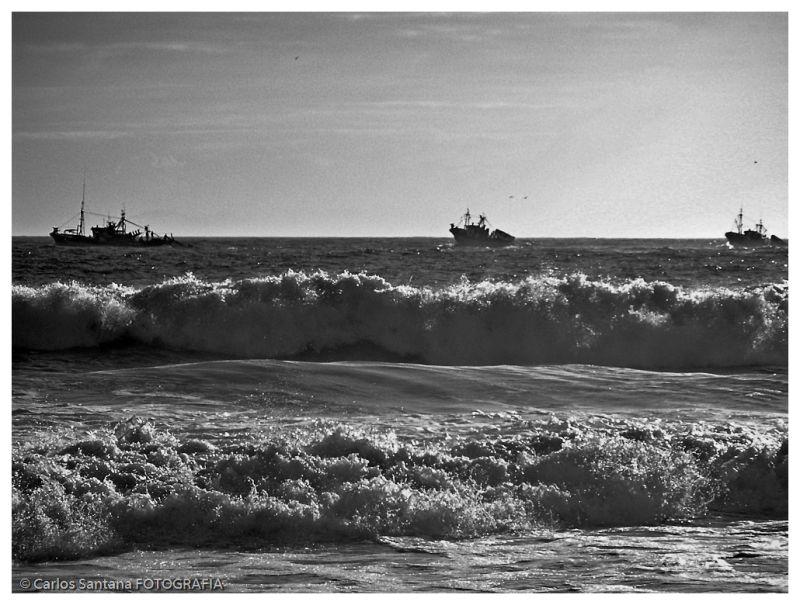 Traineiras ao mar