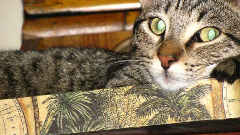 Meow..