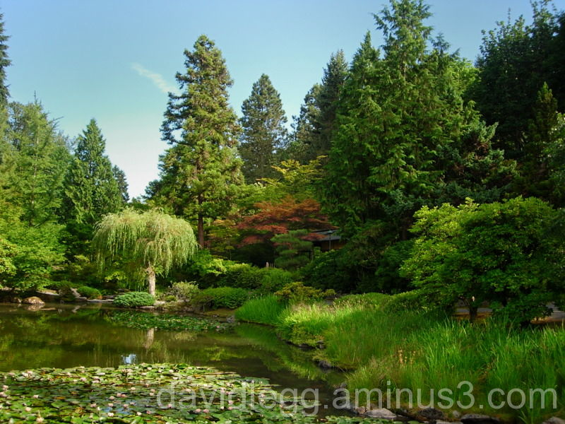 Japanese Garden Seattle 2