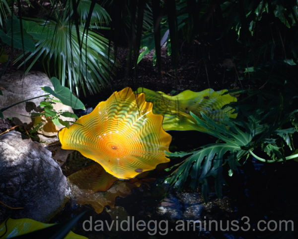 Chihuly Glass Art, Meijer Gardens