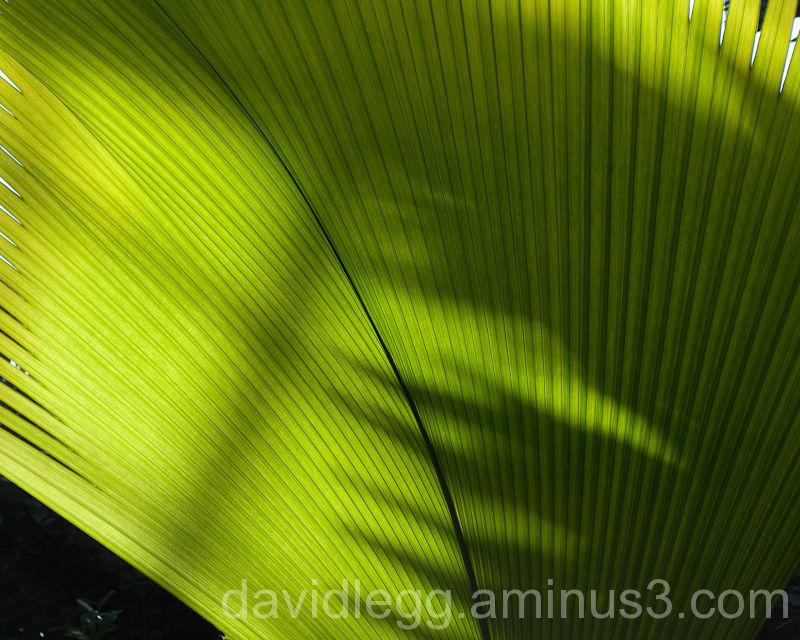 Leaf Detail 1