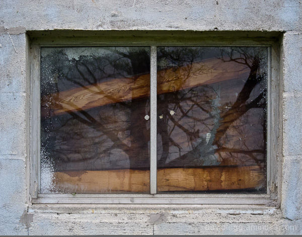 Tree Reflected in Abandoned Window