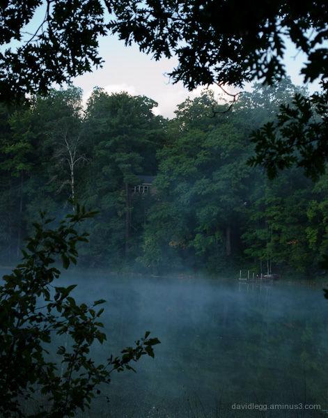 Mist Through The Trees