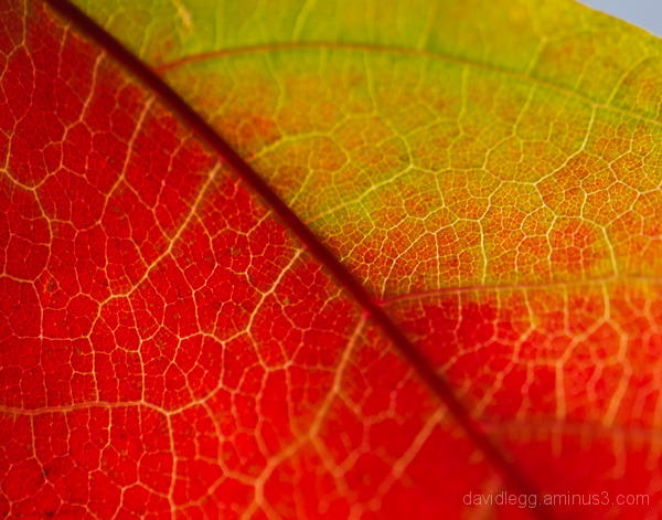 Fall Leaf Detail 2
