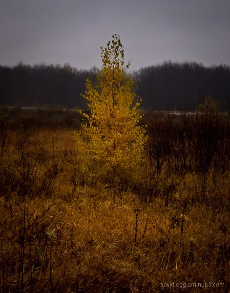 Lone Tree, November
