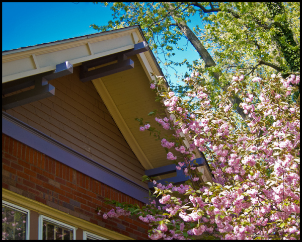 Crabapple Blooms and Craftsman House