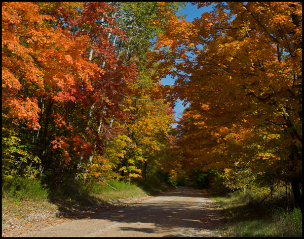Fall Color, Benzie County, 2012.