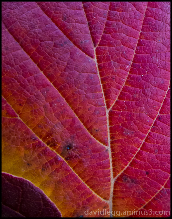 Leaf Texture in Reds and Gold