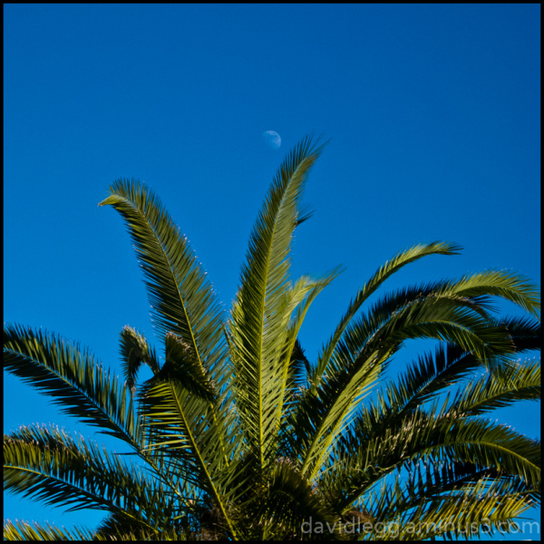 Moon and Fronds