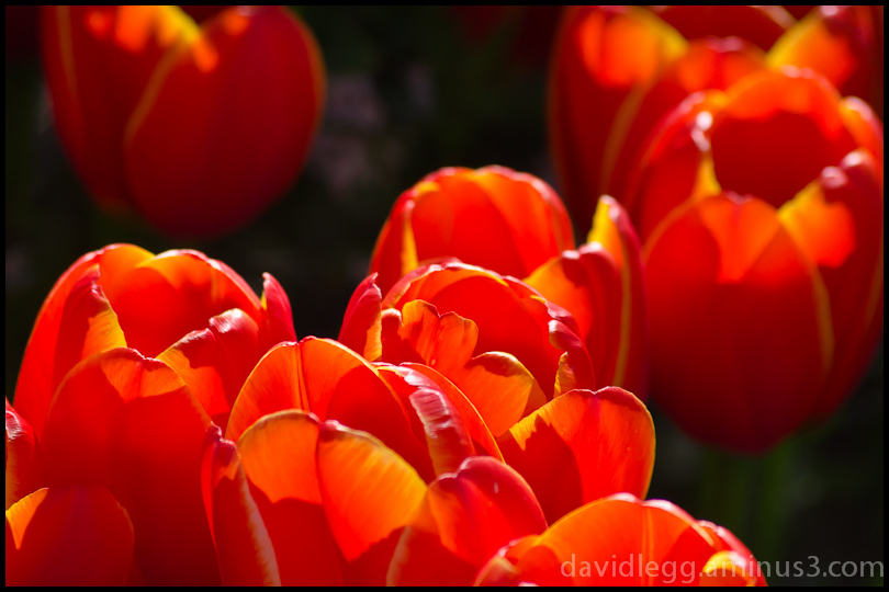 Bright Petals