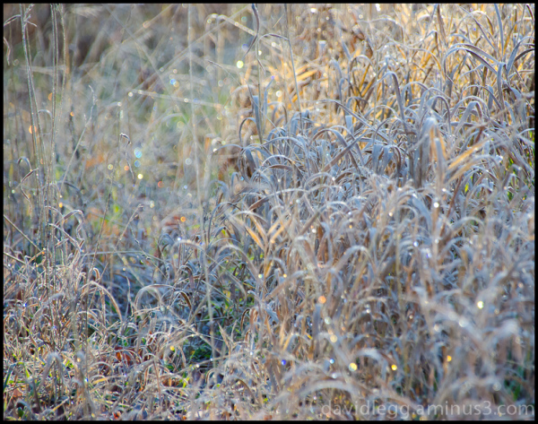 In the moment before the sun melts the frost  away