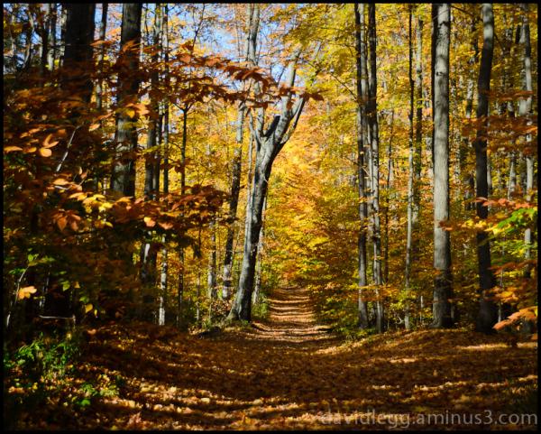 Autumn on a Beech Tree Lane
