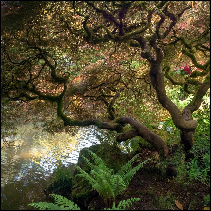Tree, Kubota Garden