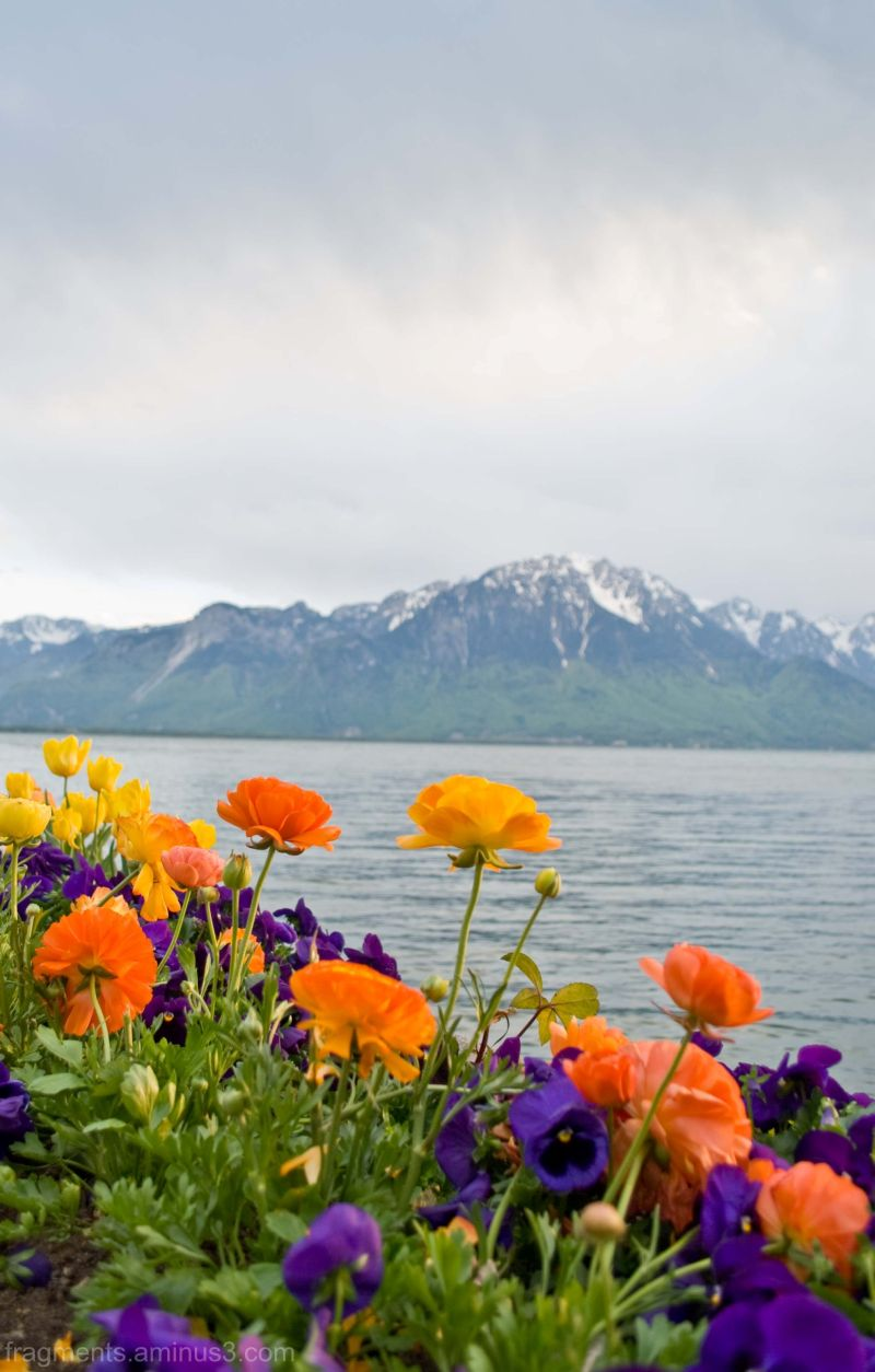 Flowers, lake and montains