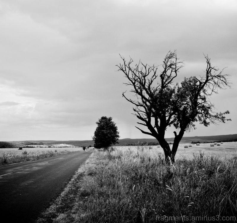 út és fa