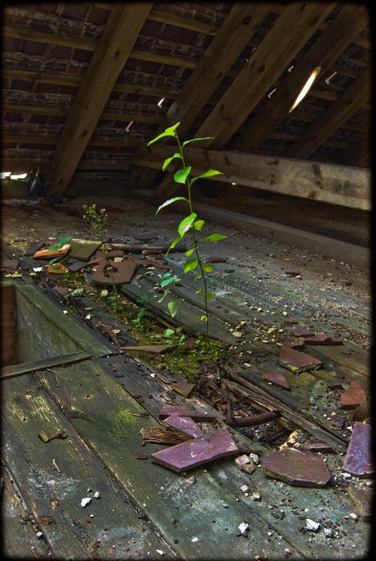 Plant in the attic