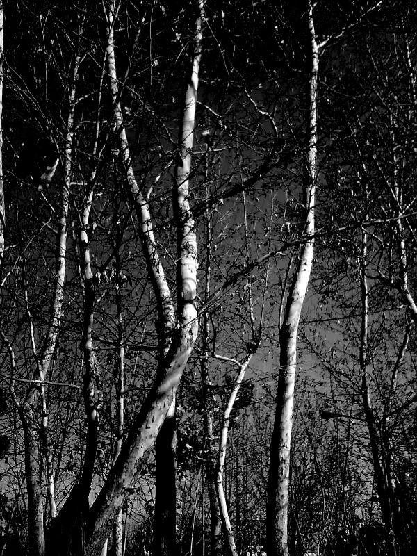 Eternal Beauty of Trees