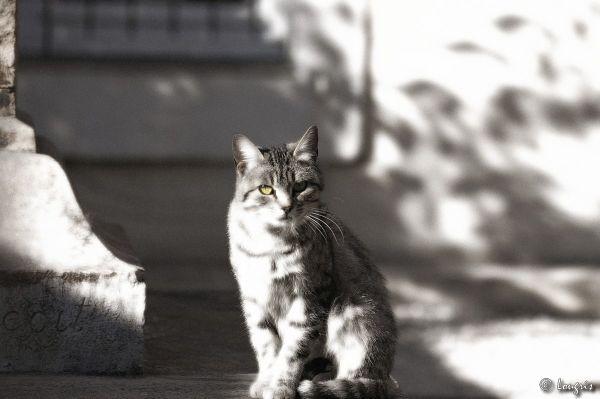 chat aux yeux dores