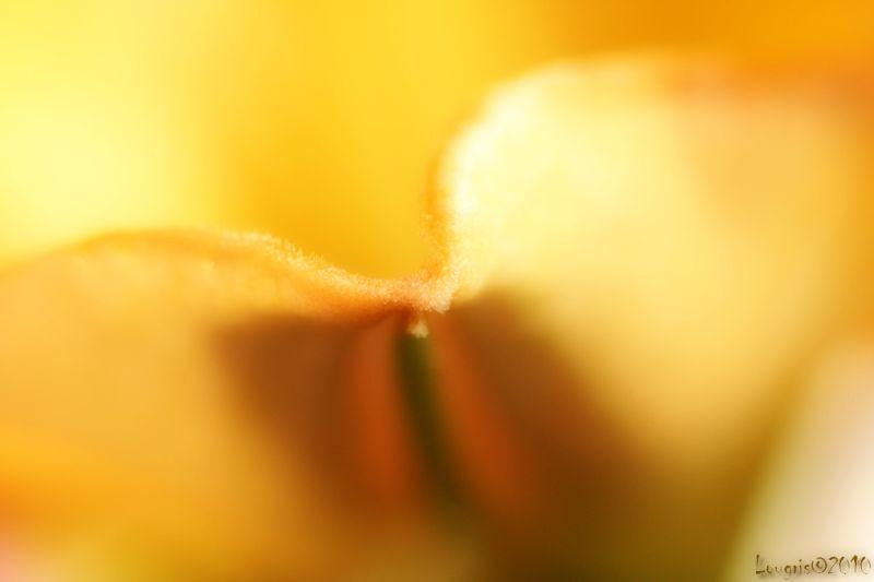 A fleur de pot...