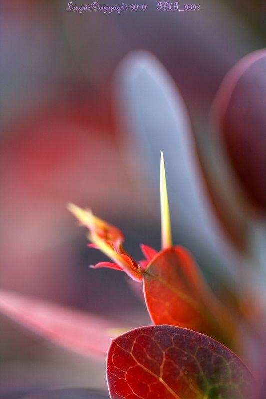 Plant Art 4/7
