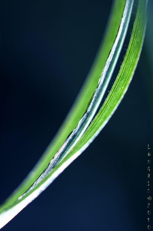 Plant art 6/7