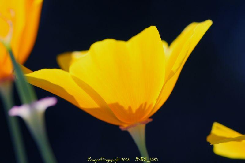 Floralie 5/8