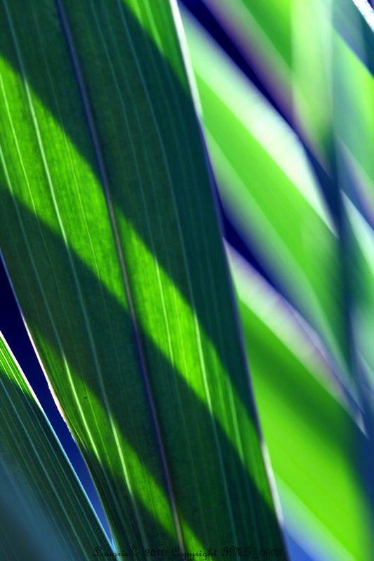 Lumières chlorophylles 1/..