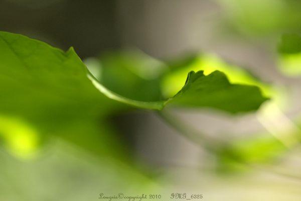 Lumières Chlorophylles 3/...