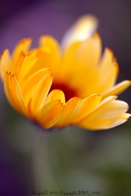 Comme une fleur.