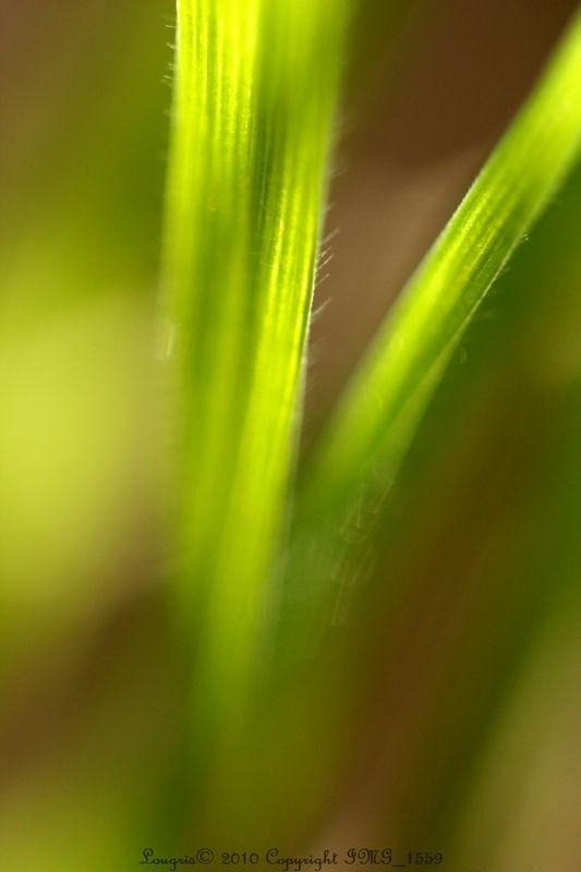 2011 : L'an vert du décor.