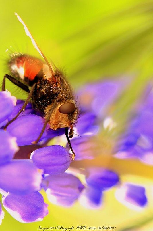Cosmic fly.