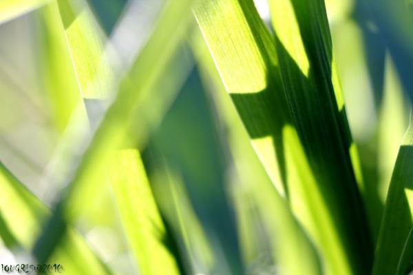 Grass matinée.