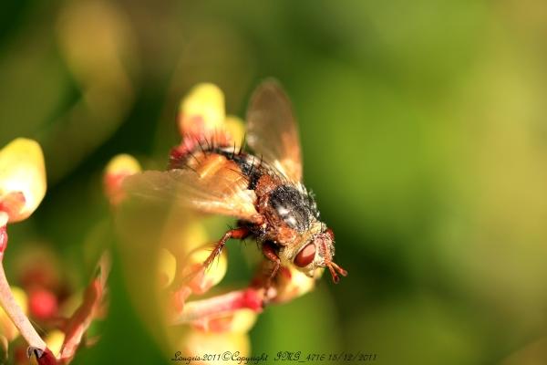 She Fly....Ahouuu...