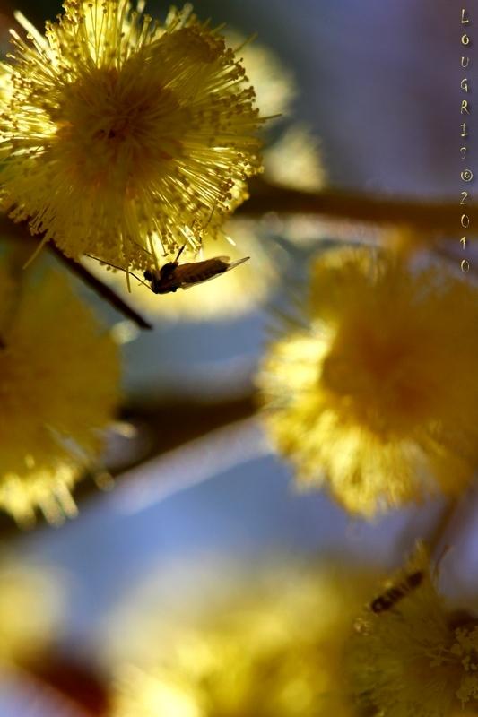 Fleur de soleil.