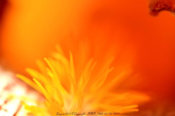 Impression fleurie III
