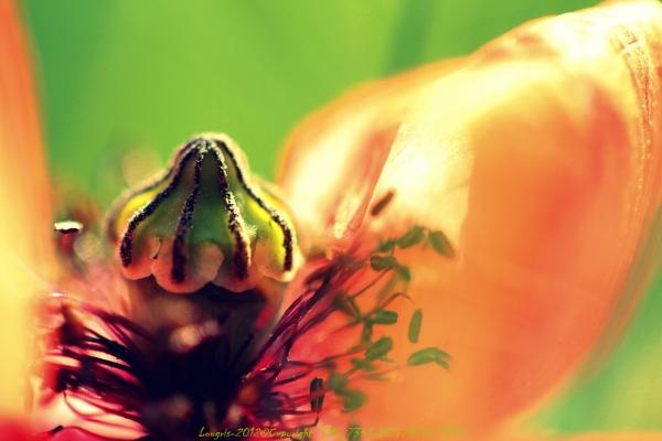 Et fleur est...