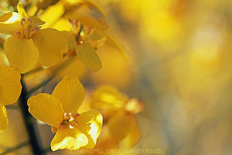 Et fleur mes rêves - I