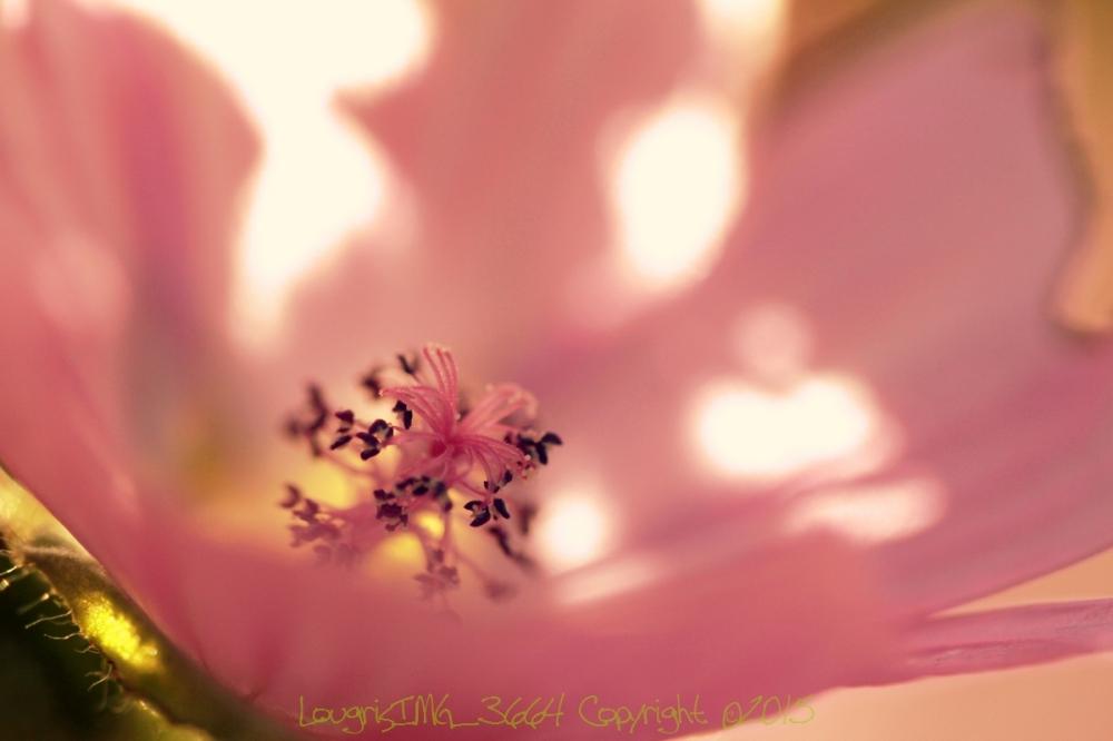 Et fleur mes rêves - III